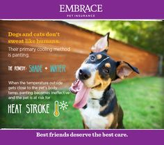 Care for your fur pals! We get scorching too! Summer Safety, Pet Insurance, Pet Health, Take Care Of Yourself, Pet Care, Fur Babies, Dog Cat, Best Friends