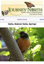 Hello Robins! Hello Spring!   Read-with-Me booklet and slideshow