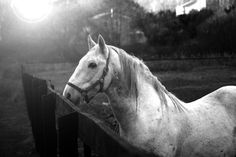 For soft-focused, black and white horse prints, check out the options on Lonny's Etsy site, like this Horse 14 photo ($250).