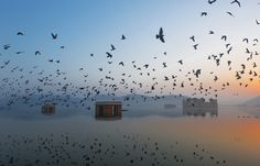 Jal Mahal at Dawn by Ravikanth Kurma