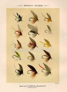 trout flies glorious fly fishing print no. 1 by EPHEMERApress
