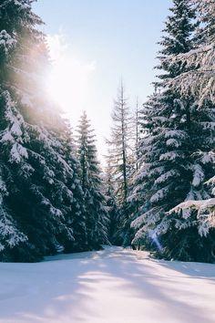 "expressions-of-nature: ""Gerlitzen, Treffen am Ossiacher See, Austria by Else-Marie de Leeuw "" Snow Photography, Landscape Photography, Photography Couples, Photography Portraits, Photography Ideas, Snow Images, Winter Scenery, Winter Trees, Usa Tumblr"