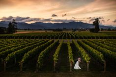 Chris and I nestled in the backdrop at the reception. Vineyards and a beautiful autumn sunset captured in the most perfect way
