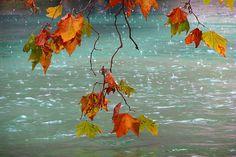 autumn rain - Google Search