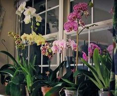 Orchid Care and Maintenance
