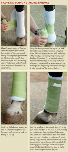 bandaging the hock, equine first aid, sounded horse, equine injury, horse wound…