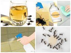 Coloque isto na sua casa - em pouca horas, não haverá nenhuma mosca ou mosquito no local! - YouTube