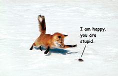 Oh FOX!!! :D