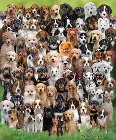 """Puppy Love Puzzle by White Mountain Puzzles.  Hard for a dog lover to resist this heart-warming puzzle filled with puppies of various breeds. Artist: Keith Kimberlin: Item 728: 1000 piece jigsaw puzzle: Finished size 24"""" x 30"""""""