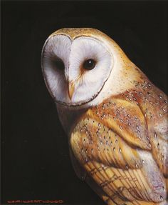 paintings of barn owls - Google Search