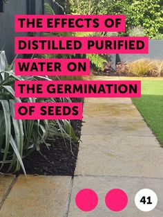 Learn The Effects of Distilled Purified Water on the Germination of Seeds Purified Water, Garden Seeds, Minerals, Landscaping, Nutrition, Learning, Healthy, Studying, Yard Landscaping