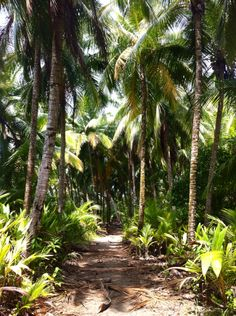 En el Parque Nacional Marino Ballena. Costa Rica.