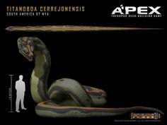 Titanoboa cerrejonensis by Herschel-Hoffmeyer