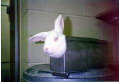 Stop hurting bunnies!