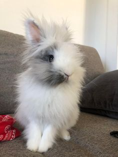 /r/rabbits is an open community where users can learn, share cute pictures, or ask questions about rabbits. Please note we are a *pet rabbit*. Lionhead Rabbit, Pet Rabbit, Funny Rabbit, Anime Animals, Baby Animals, Cute Animals, Rabbit Pictures, Cute Animal Pictures, Cute Baby Bunnies