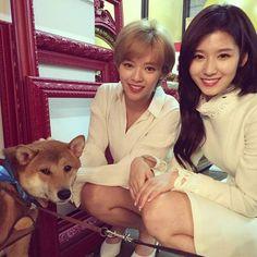 Too adorable  #ONCE #원스 #TWICE #트와이스 #mina #sana #jihyo #momo #jungyeon #chaeyoung #tzuyu #nayeon #dahyun #jyp #penguin #tiger #art #blackswan #bunny #couple #goddess #hot #perfectio #fanart #ballet #family #fashion #cute #mlb #dog