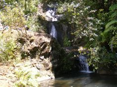 Fairy Falls Track and good introduction to all the Waitakeres have to offer