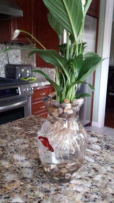 $8 Betta Fish & Flower Vase table centerpiece