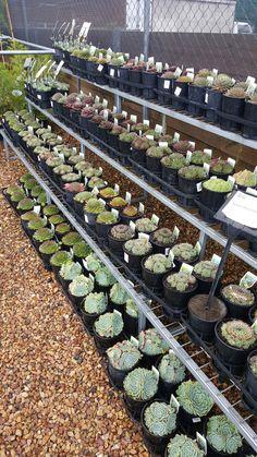 Buy Succulents Online, Garden Ideas, Cacti And Succulents, Landscaping Ideas, Backyard Ideas
