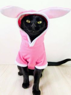I don't think kitty is impressed with Playing the Easter Bunny