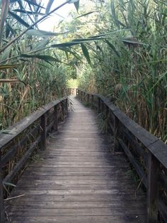 A hidden treasure of Monroe County, inside Tinker Nature Park you'll find a magical fair trail!