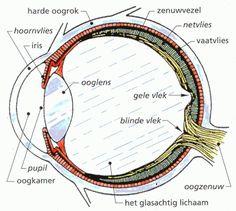 Oogheelkunde Startpagina, alles over oogziekten en ooglaseren