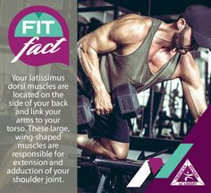 Trifocus Fitness Academy is SA's leader in fitness and sports education, offering the most extensive array of fitness qualifications at the most competitive prices. Fitness Courses, Latissimus Dorsi, Shoulder Joint, Knowledge Is Power, Willpower, Weights, Muscles, Work Hard, Life Is Good