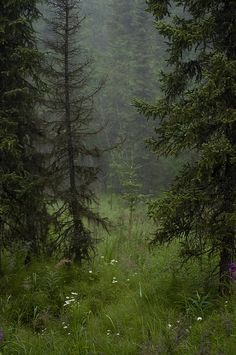 foggy morning in the forest Foggy Morning, Nature Aesthetic, Dark Forest, Foggy Forest, Fantasy Forest, Forest Fairy, All Nature, Walk In The Woods, The Great Outdoors