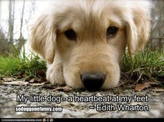 ♥ Here is a lovely dog quote for #woofwednesday  ♥    Tell us what you love about your dog...