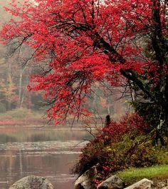 Fall in Otis, Massachusetts