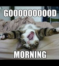 Good Morning Funny Pictures, Good Morning Quotes For Him, Morning Quotes Images, Funny Good Morning Quotes, Good Morning Picture, Morning Humor, Good Morning Animals, Funny Cat Memes, Funny Cats