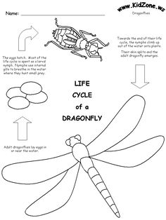 Dragonfly Lifecycle Worksheet, for my little science nerd Science Activities For Kids, Preschool Science, Elementary Science, Sequencing Activities, Science Biology, Life Science, Science And Nature, Carl Sagan, Dragonfly Life Cycle