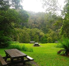 While doing the #greatoceanroad trip when I was in #Australia  we stopped for a short hike at #melbagully  and I was very impressed by how vivacious the rainforest was. Doesn't it look beautiful? That's the #picnic area where you can have your lunch and I'm obsessed with how lush the greenery is.  For more beautiful photos from my Great Ocean Road trip check out my blog .. link in bio :) by widee_wanderer