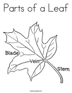 Parts of a Leaf Coloring Page - Twisty Noodle Fall Preschool, Preschool Kindergarten, Kindergarten Worksheets, Waldorf Preschool, Waldorf Math, Kindergarten Projects, Montessori Preschool, Preschool Crafts, Diy Crafts