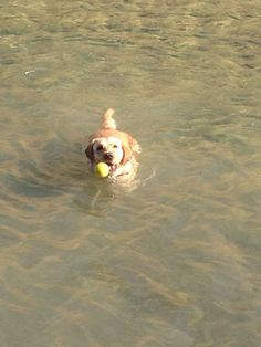 Water and a tennis ball, all she needs....