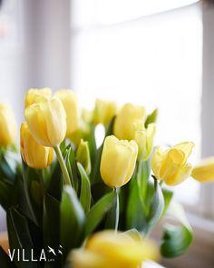 Ihanaa naistenpäivää  toivottaa VILLA LKV