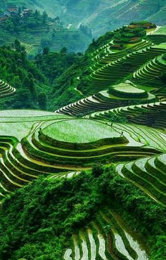 - very nice stuff - share it -amazing terraced rice paddy fields Giant Water Lily, Places Around The World, Around The Worlds, Beautiful World, Beautiful Places, Wonderful World, Amazing Places, Jolie Photo, Amazing Nature