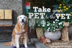 Importance of Vet Visits & Pet Preventive Care #GetHealthyHappy