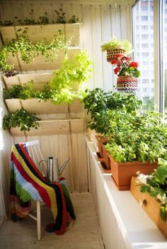 vegetable-plant-in-green-balcony-