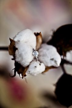 Rustic cotton field engagement ring with J'adore la Photographie & The Frosted Petticoat
