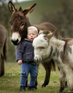 mini donkeys with 15 month old boy