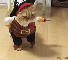 The perfect Pirate Cat Kitty Animated GIF for your conversation. Discover and Share the best GIFs on Tenor. Funny Animal Videos, Funny Animal Pictures, Funny Animals, Cute Animals, Pet Pictures, Names For Male Cats, Cute Cat Names, Cat Costume Makeup, Cat Costumes