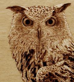 Eagle Owl (sold) - pyrographic illustration by Cate McCauley - burned on wood