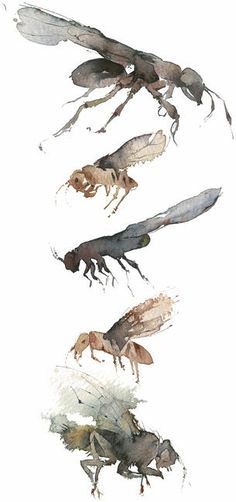 KO.62 flies limited edition giclee print 19x36cm