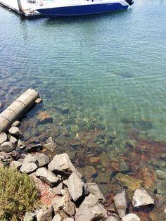 Tuna Crabs @ Mission Bay Mission Bay, San Diego Beach, Crabs, Tuna, Water, Outdoor, Water Water, Aqua, Outdoors