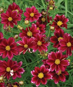 25 Drought Resistant Perennials Mercury Rising #Gardening #DroughtResistant