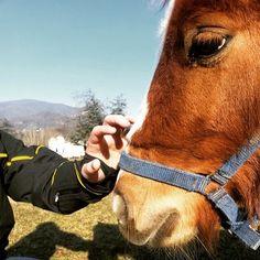 #horse #horses #riding #passion #ponies #pony #beautiful #nature #animal #pet #instamoment #horseriding #puppy #blonde #fur #tenderness #novellaorchidea #novella #orchidea #raccontierotici #racconti #ebook #ricardo #tronconi #eroticnovel