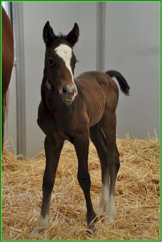 cutecutecute and it falls off to the side!  Thorn Song out of Heatology filly foaled April 7, bred by Madeline Auerbach