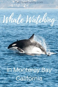 A day of epic sightings on a whale watching trip in Monterey Bay, California Monterey Bay California, Northern California, Thailand, Korea, Travel Usa, Travel Tips, Canada Travel, Travel Guides, Road Trip Usa