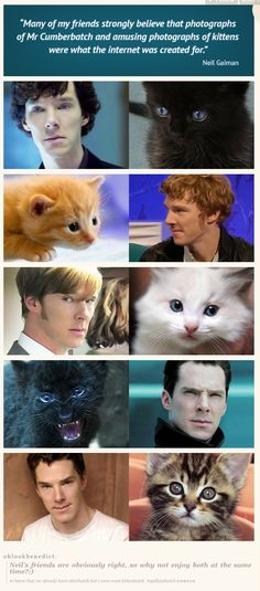 kittenbatch should be a thing :) <-- Oh yes! Actually, I've been thinking that he reminds me of a kitten for a while..